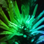 Banner of Marijuana Plant Glowing Colors