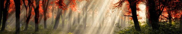 All Shine (banner)