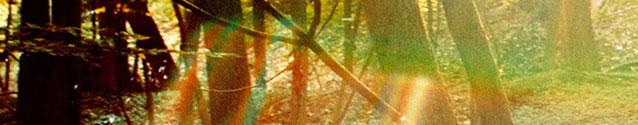 Gambino - Camp (banner)