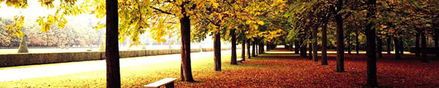 Fall Trees (banner)