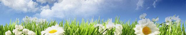 Sky Flowers (banner)