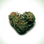 Marijuana Love