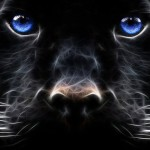 Night Panther · Fire