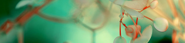 Groove-banner